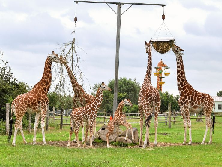 Foto: Jaderpark, Giraffen