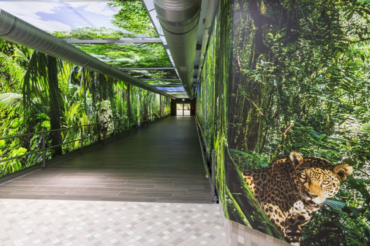 Foto: Tropical Islands, Amazonia