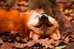 Foto: Erlebnispark Tripsdrill, Herbst im Wildparadies